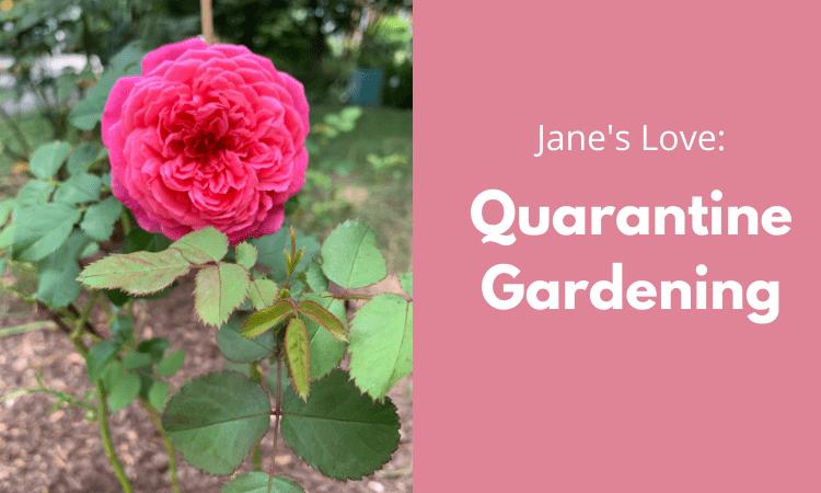 Quarantine Gardening Cover